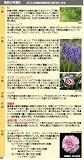 seasonalflowerfregrance1