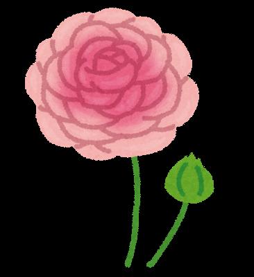 flower_ranunculus