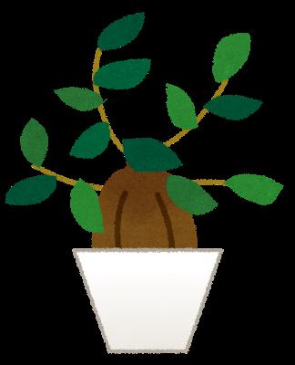 plant_gajumaru (1)