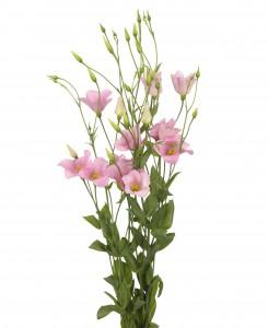 botanic-p