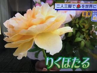 IMG_9904